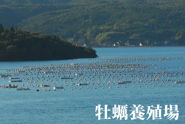 牡蠣養殖場